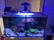 Meerwasser Aquarium Red Sea Reefer