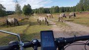 Wer hat Lust gemeinsam E-bike