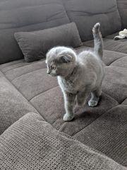 2 süße Kitten SF und