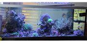Meerwasseraquarium 450l komplett
