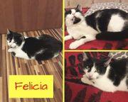 Felicia Katze aus dem Tierschutz