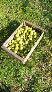 Zitronenbirnen zu verkaufen