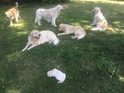 Liebevolle Hundeeltern gesucht