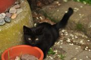 Zwei schwarze Kätzchen Katerchen