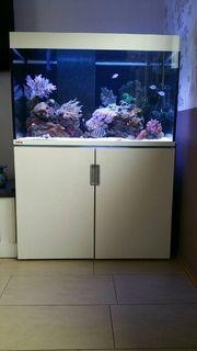 Meerwasser Aquarium komplett mit allem