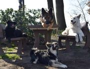Erfahrener Dogsitter