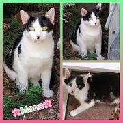 Wunderschöne verschmuste Katze 2 Jahre