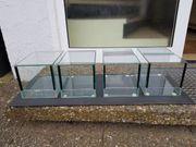 Verkaufe 10 Stück kleine Terrarium