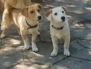 Nora und Nina- sehr kleine