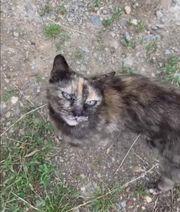 Katze Lina geb 2018 sucht