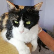 Nettes Katzenmädchen Sissi sucht ein