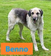 Benno und Beau einer der