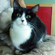 Kätzchen Sheela wartet auf Dich