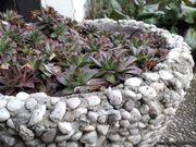 Pflanzschale aus Steinen
