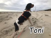 Vermittlungshilfe Toni