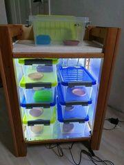 Aufzuchboxen für Reptilien - 8 Fächer
