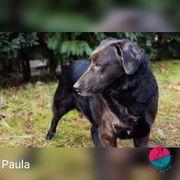 Paula - Braucht ein bisschen extra