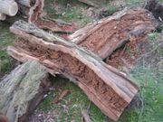 Baum-Gutachten Baumkontrollen Verkehrssicherheitsgutachten
