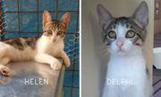 Helen Delphi zuckersüße Schwestern ca