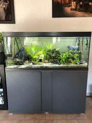 Aquarium Deko Kaufen Verkaufen
