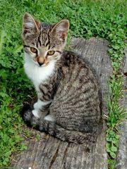 Katze Kätzin 4 Monate