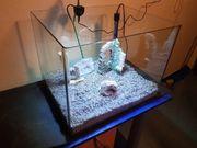 55 Liter Dennerle scapers Aquarium