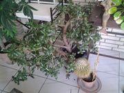 Garten Zimmerpflanze
