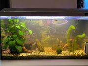 80L Aquarium komplett