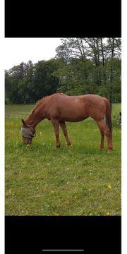 Pferde Kaufen Und Verkaufen Bei Quoka De