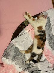 Katzenmama ROXY wird vermisst