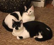 Shu Bimba ein wunderschönes Geschwisterpaar