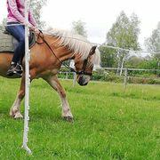 Reiterin sucht Pferd als Reitbeteiligung