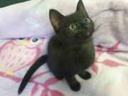 Mix - Babykatzen Mischlings - Katzenbabys