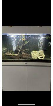 Aquarium Juwel Rio 125 mit