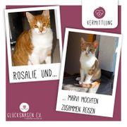 Katzenduo Rosalie und Marvi suchen