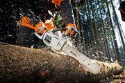 Baumfällungen - Bäume kappen - abtragen - schneiden -