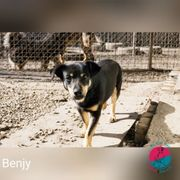 Benjy - Wenn Liebe durch den