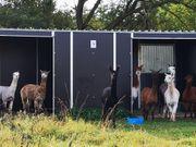 Fahrbare Weidehütten Außenboxen von Hippo-Tech