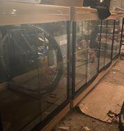 Dendrobaten Terrarium zu verkaufen 4