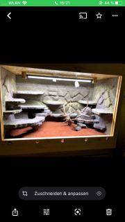 Massivholz Terrarium mit Felsrückwand