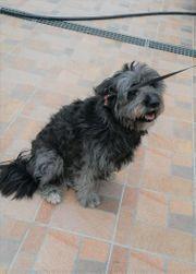 Katzenverträgliche freundliche Terrier Mischlingshündin Lana