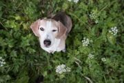 Suche Hundebetreuung MO bis MI