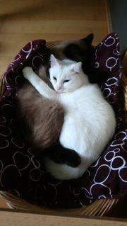 2 Katzendamen