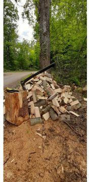 Waldfrisches Buchenholz