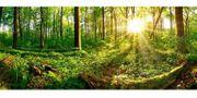 Suche Wald zum Kauf minimum