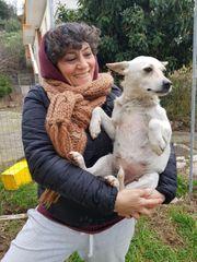 Straßenhund Sally könnte ab April
