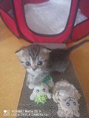 Süße Kitten SF