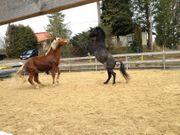 Bauern und Reiter Hof - Pferde-Ranch