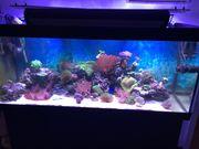 Meerwasser Aquarium 450l