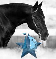 Deckhengst Quarter Horse black Reining